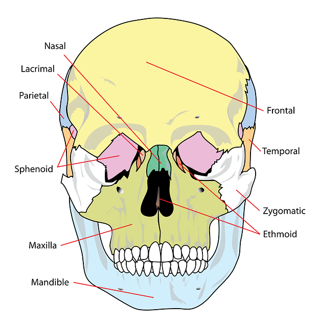 Understanding Paranasal Sinus Infection
